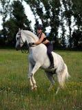 Equestrian bareback rearing arabian horse Stock Image