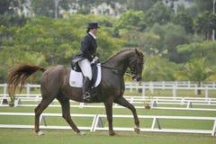 Equestrian del Dressage Foto de archivo libre de regalías
