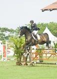 equestrian doskakiwania przedstawienie Zdjęcia Royalty Free