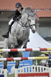 equestrian doskakiwania przedstawienie Obraz Stock