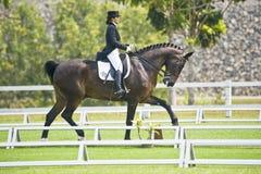 equestrian dressage Стоковые Изображения RF
