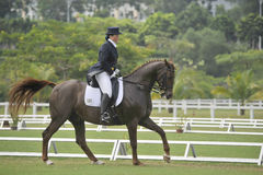 equestrian dressage Стоковое фото RF