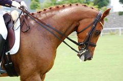Equestrian - Dressage Royalty Free Stock Images