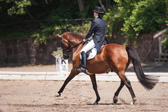 Equestrian Dressage Royalty Free Stock Image