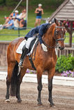 Equestrian Dressage Stock Image