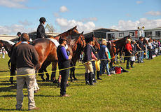 Equestrian Event at The 2012 Canterbury A&P Show. Royalty Free Stock Photography
