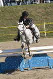 Equestrian event - jumper Stock Image