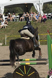 Equestrian event - jumper Stock Images