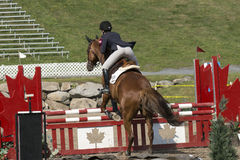 Equestrian event - jumper Royalty Free Stock Photography
