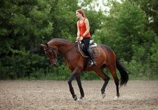 Equestrian girl horseback riding trot. Equestrian girl horseback riding along forest trail stock photo