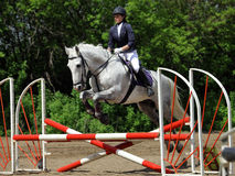 Equestrian girl jumping a horse over rails Royalty Free Stock Photography