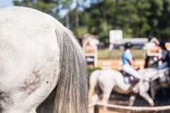 Horse Gray Tail Close-Up Abstract Rider Arena stock image