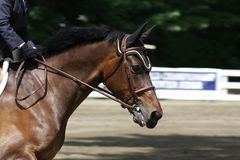 Equestrian horse. Competing in an event stock image
