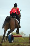 The equestrian and horse. A jump through an obstacle Stock Image