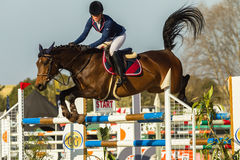 Equestrian Horse Girl Jumping Stock Images