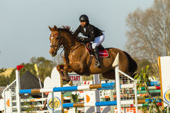 Equestrian Horse Girl Jumping Royalty Free Stock Photo