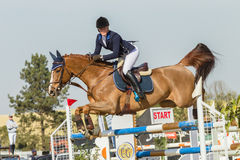 Equestrian Horse Girl Jumping Stock Image