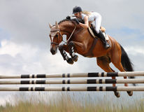 Equestrian - horse jumping Royalty Free Stock Image
