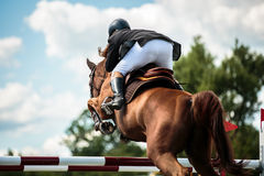 Equestrian Royalty Free Stock Images