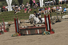 Equestrian - horse jumping Royalty Free Stock Photography