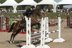 Equestrian - horse jumping. Side view of young rider and Brown horse making a jump during competition at the bromont concours June 12, 2016 Royalty Free Stock Image