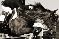 Equestrian Horse and Rider in Action. Close up of a show jumping horse and rider in action as they clear a jump during a competition (monochrome tint Stock Photography