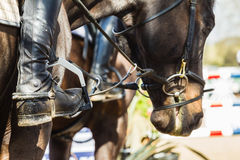 Equestrian Horse Rider Boots Closeup Stock Photography