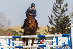 Equestrian Horse Rider Jumping Stock Photography
