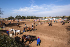 Equestrian Horse Show Jumping Royalty Free Stock Photo