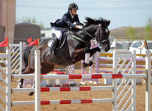 Equestrian horseback skacze przeszkodę zdjęcie royalty free