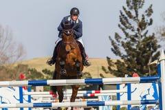 Equestrian jeźdza Koński doskakiwanie Fotografia Stock