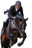 Equestrian: jinete con el caballo de bahía en la demostración de salto, aislada Imagen de archivo libre de regalías