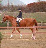 Equestrian joven Fotografía de archivo