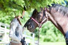 Equestrian joven del adolescente que toca su nariz del caballo de la castaña Fotos de archivo libres de regalías