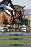 Equestrian jumper Royalty Free Stock Photos