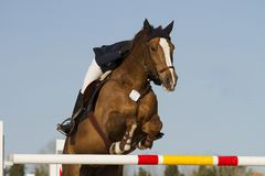 Equestrian jumper Stock Images
