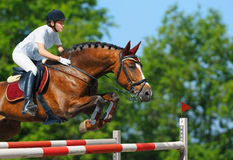 Equestrian jumper - horsewoman and bay mare. Young woman jumping with bay horse Stock Image