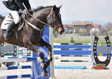 Equestrian jumping on brown horse. In competition Royalty Free Stock Photo