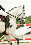 Equestrian jumping sport. Outdoor cloudy day Stock Photos
