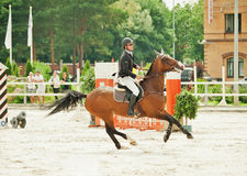 Equestrian jumping sport Stock Images