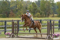 Equestrian jumps gelding over simple fence. Equestrian jumps chestnut gelding over a simple vertical fence in a show arena Stock Image