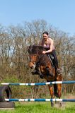 equestrian konia doskakiwanie Fotografia Stock