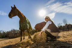 Equestrian Model and Horses. A blonde equestrian model feeds her horses in an outdoor environment Royalty Free Stock Photos