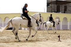 Equestrian performs on March 23, 2012, Bahrain Stock Images