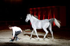 Equestrian performs on March 26, 2012 in Bahrain Stock Images