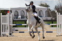 Equestrian przedstawienia doskakiwanie Zdjęcie Stock