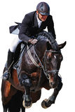 Equestrian: rider with bay horse in jumping show, isolated Royalty Free Stock Image