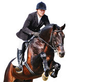 Equestrian: rider with bay horse in jumping show, isolated. On white background Royalty Free Stock Photo
