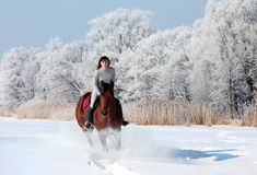 Equestrian riding horse on a field in winter Royalty Free Stock Photography