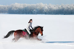 Equestrian riding horse on a field in winter Royalty Free Stock Photos